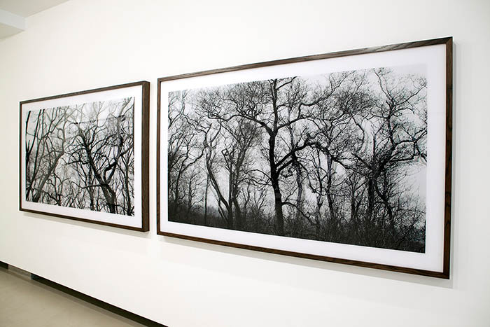Gallery Effearte ⎜ Forest