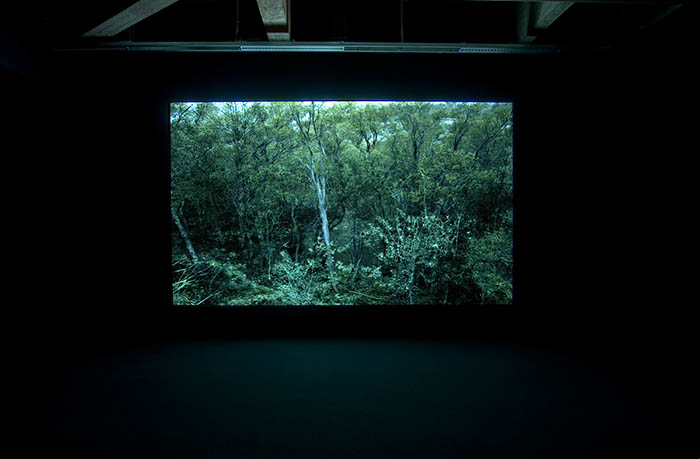 EMMA ⎜ Forest (Tree and Pond), 2009