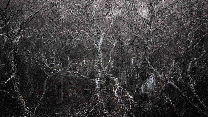 Forest (Reddish 1), 2009