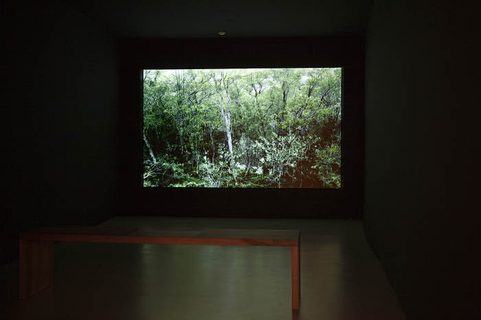 Forest (Tree and Pond) at Gallery Effearte 2011