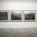 Galerie Anhava ⎜ Forest thumbnail